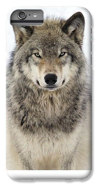 Wolves iPhone 7 Plus Case - Timber Wolf Portrait by Tony Beck