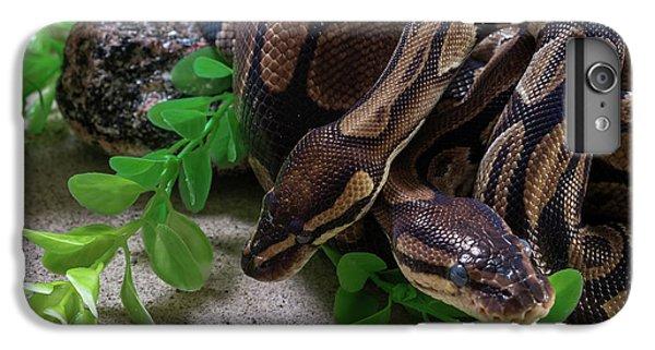 Two Burmese Pythons Python Bivittatus IPhone 7 Plus Case