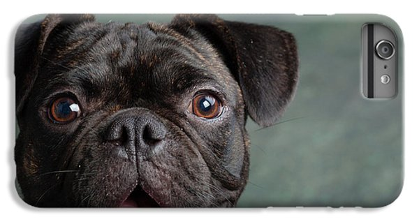 Pug iPhone 7 Plus Case - Portrait Of Pug Bulldog Mix Dog by Animal Images