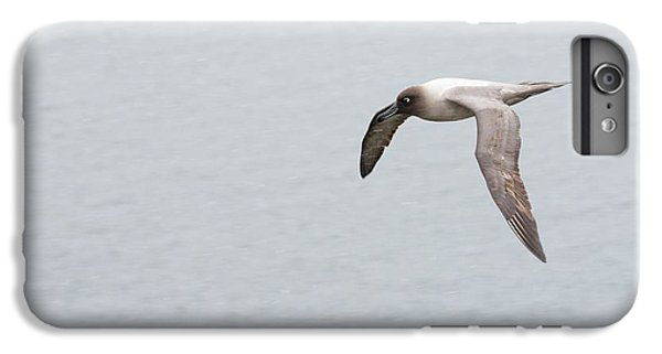 A Light Mantled Albatross IPhone 7 Plus Case by Ashley Cooper