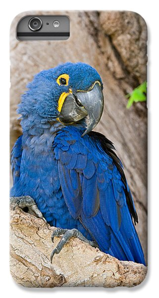 Macaw iPhone 7 Plus Case - Close-up Of A Hyacinth Macaw by Panoramic Images