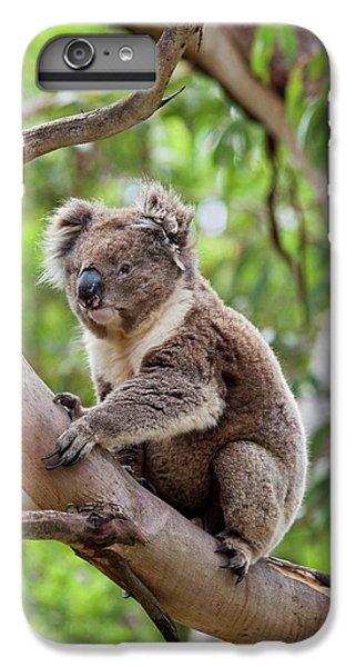 Koala (phascolarctos Cinereus IPhone 7 Plus Case