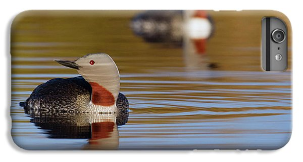 Red-throated Loon Pair IPhone 7 Plus Case