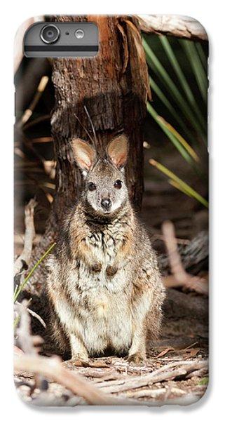 Tammar Wallaby (macropus Eugenii IPhone 7 Plus Case by Martin Zwick