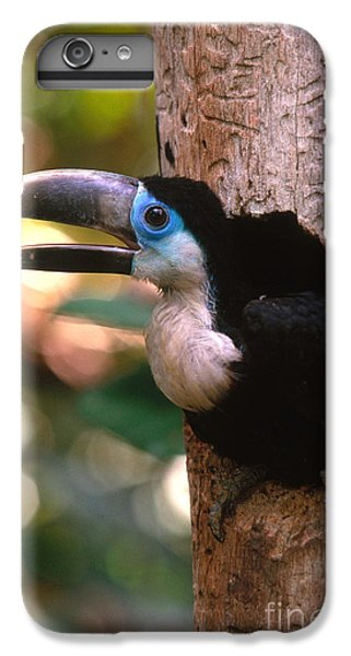 Yellow-ridged Toucan IPhone 7 Plus Case by Art Wolfe