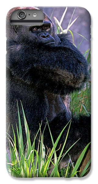 Silverback Western Lowland Gorilla IPhone 7 Plus Case