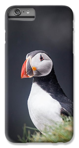 Puffin iPhone 7 Plus Case - Atlantic Puffin Fratercula Arctica by Panoramic Images