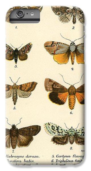 Butterflies IPhone 7 Plus Case by English School