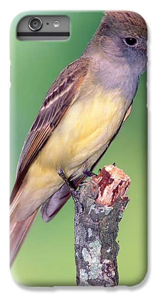 Great Crested Flycatcher IPhone 7 Plus Case