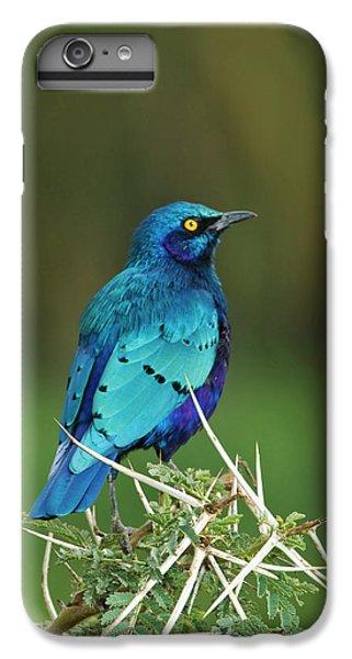 Starlings iPhone 7 Plus Case - Kenya, Lake Nakuru National Park by Jaynes Gallery