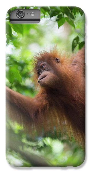 Sumatran Orangutan IPhone 7 Plus Case by Scubazoo