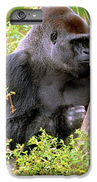 Western Lowland Gorilla IPhone 7 Plus Case