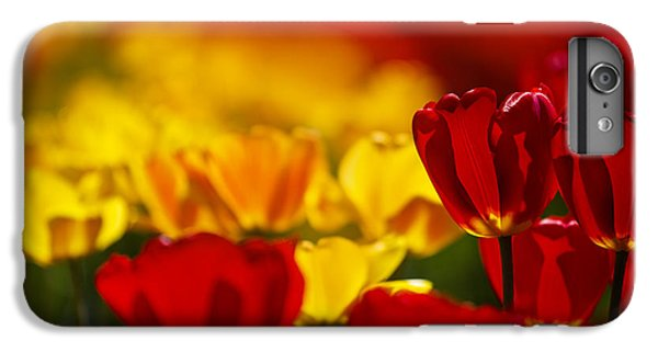 Tulip iPhone 7 Plus Case - Red And Yellow Tulips by Nailia Schwarz