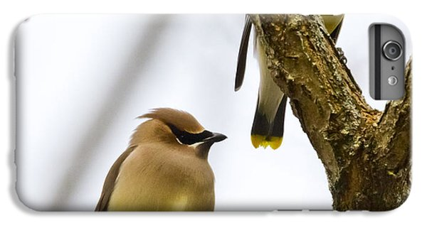 IPhone 7 Plus Case featuring the photograph A Pair Of Cedar Waxwings by Ricky L Jones