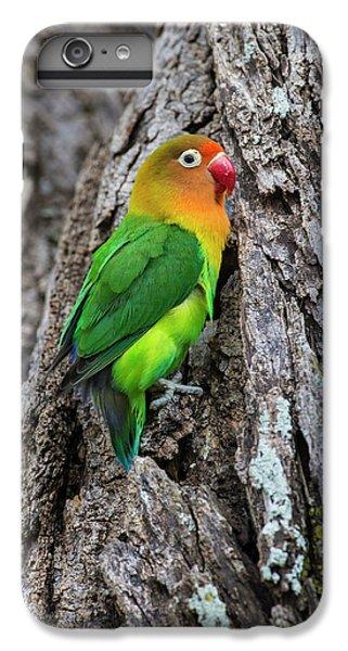 Lovebird iPhone 7 Plus Case - Africa Tanzania Fischer's Lovebird by Ralph H. Bendjebar