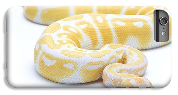 Python iPhone 7 Plus Case - Albino Royal Python by Michel Gunther