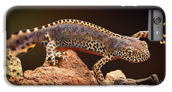 Alpine Newt IPhone 7 Plus Case