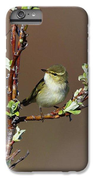 Arctic Warbler IPhone 7 Plus Case