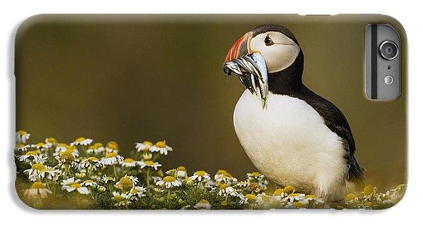 Atlantic Puffin Carrying Fish Skomer IPhone 7 Plus Case by Sebastian Kennerknecht