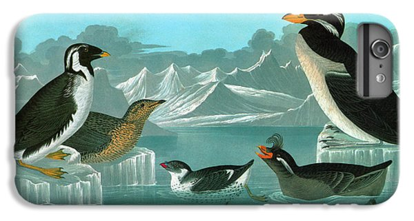 Auklets iPhone 7 Plus Case - Audubon Auks by Granger