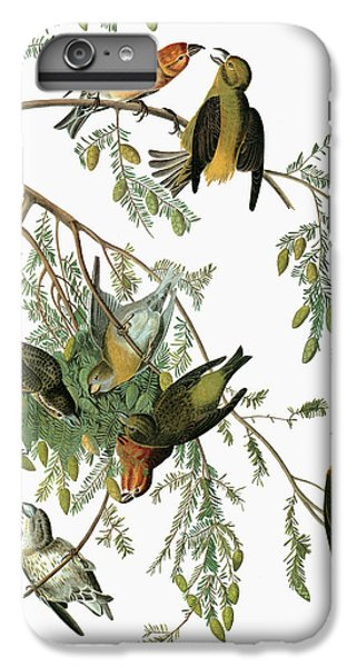 Crossbill iPhone 7 Plus Case - Audubon Crossbill by Granger