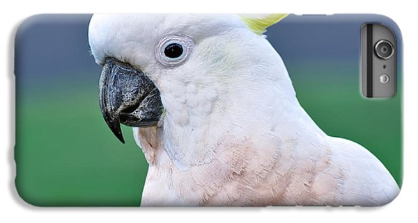 Australian Birds - Cockatoo IPhone 7 Plus Case by Kaye Menner