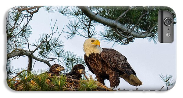 Bald Eagle With Eaglets  IPhone 7 Plus Case