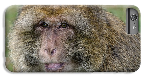 Barbary Macaque IPhone 7 Plus Case by Nigel Downer