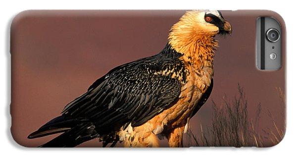 Bearded Vulture Or Lammergeier IPhone 7 Plus Case