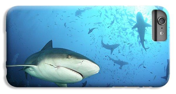 Hammerhead Shark iPhone 7 Plus Case - Beqa Shark Labs by Alexander Safonov