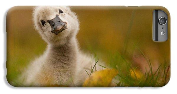 Swan iPhone 7 Plus Case - Black Swan Baby by Robert Adamec