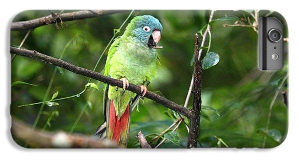 Blue Crowned Parakeet IPhone 7 Plus Case