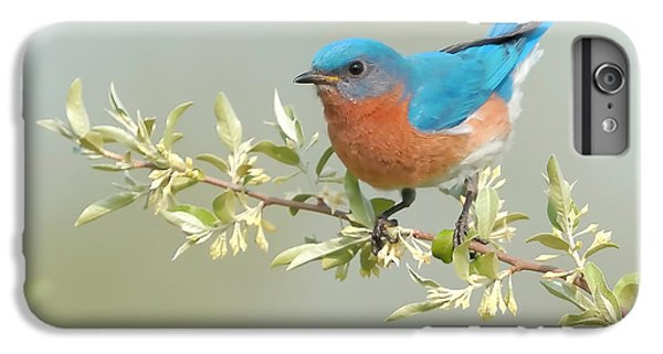 Bluebird Floral IPhone 7 Plus Case by William Jobes