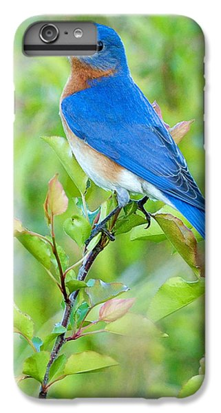 Bluebird iPhone 7 Plus Case - Bluebird Joy by William Jobes