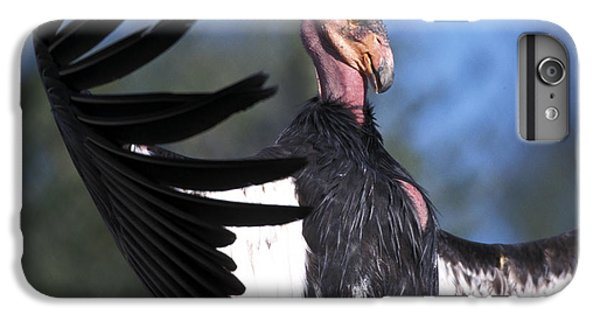 California Condor IPhone 7 Plus Case by Mark Newman