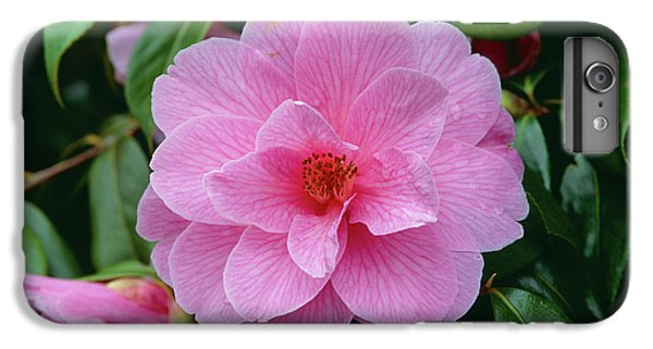 Donation iPhone 7 Plus Case - Camellia Williamsii Donation. by Adrian Thomas/science Photo Library