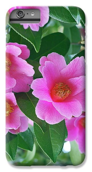 Donation iPhone 7 Plus Case - Camellia X Williamsii 'donation' by Neil Joy/science Photo Library