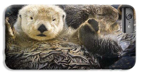 Otter iPhone 7 Plus Case - Captive Two Sea Otters Holding Paws At by Tom Soucek