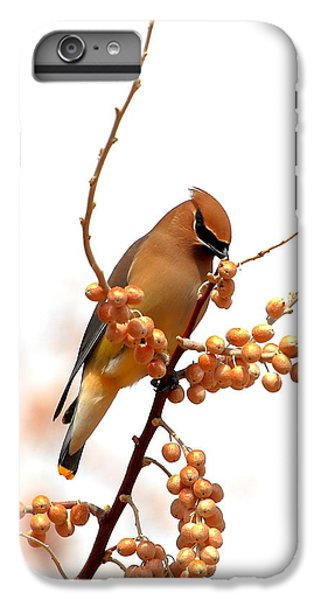 Cedar Waxing iPhone 7 Plus Case - Cedar Wax Wing by Floyd Tillery