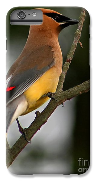 Cedar Waxing iPhone 7 Plus Case - Cedar Wax Wing II by Roger Becker