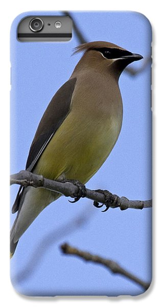 Cedar Waxing iPhone 7 Plus Case - Cedar Waxwing 2 by Eric Mace