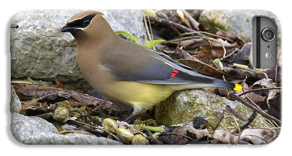 Cedar Waxing iPhone 7 Plus Case - Cedar Waxwing by Eric Mace