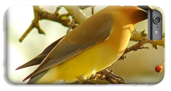 Cedar Waxwing IPhone 7 Plus Case by Robert Frederick