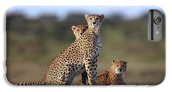 Cheetah iPhone 7 Plus Case - Cheetahs Family by Sultan Sultan Al