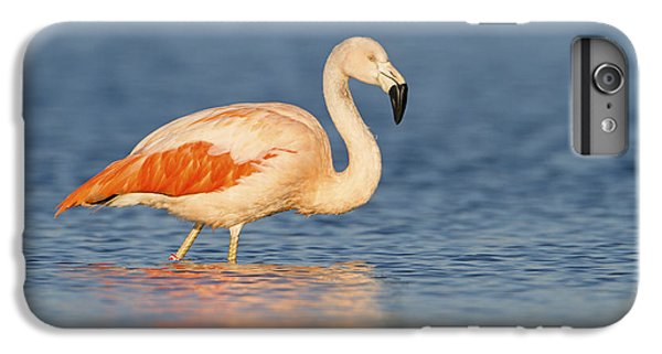Chilean Flamingo IPhone 7 Plus Case by Ronald Kamphius