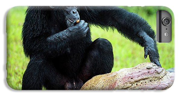 Chimpanzees IPhone 7 Plus Case