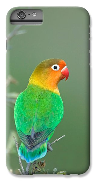 Lovebird iPhone 7 Plus Case - Close-up Of A Fischers Lovebird by Panoramic Images