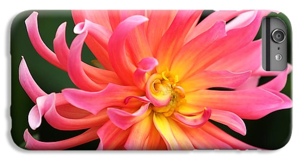 Colorful Dahlia IPhone 7 Plus Case