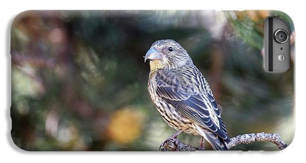 Crossbill iPhone 7 Plus Case - Common Crossbill Juvenile by Dr P. Marazzi