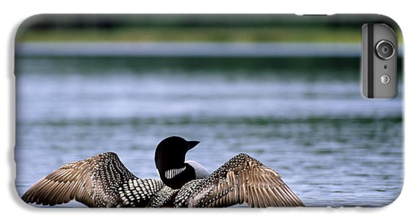 Common Loon IPhone 7 Plus Case by Mark Newman